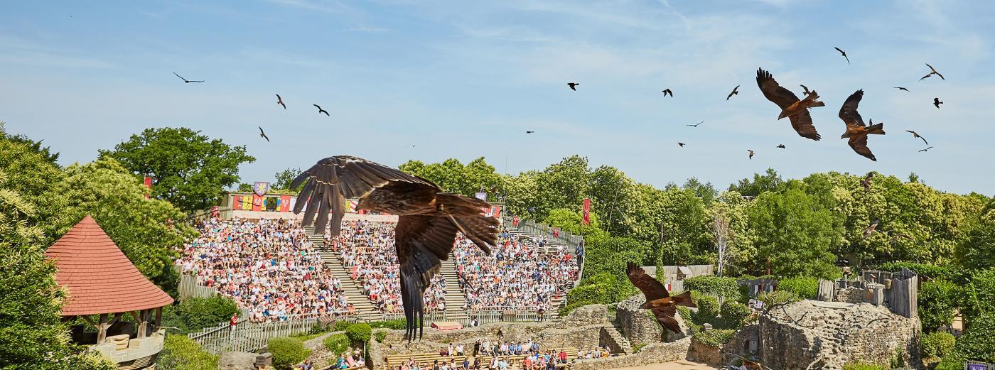 Spectacle de fauconnerie au Puy du Fou